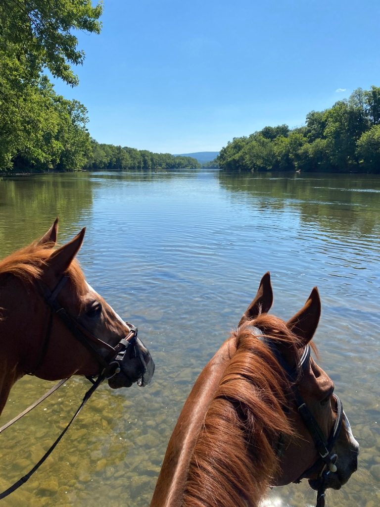 Chatter and Whisper enjoying the Shenandoah River